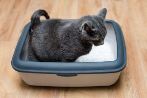 diy cat litter box | Ultimate Pet Nutrition