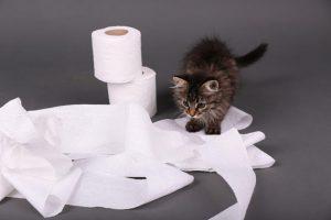 kitten behavior | Ultimate Pet Nutrition