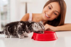kitten eating | Ultimate Pet Nutrition