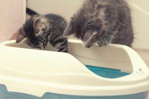 kitten training tips | Ultimate Pet Nutrition