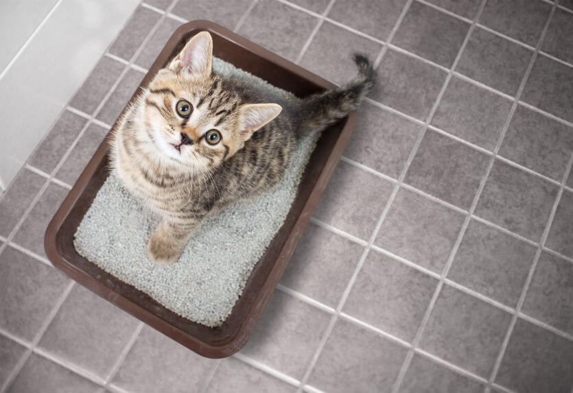 Kitten Training Tips And Tricks To Easily Train Your Kitty