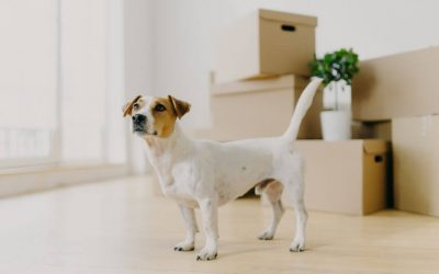 What To Do When Moving With A Dog? Keep Your Dog's Routine Unchanged