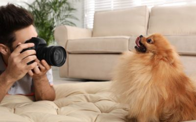 Pet Photography Ideas: How To Take Pics Of Your Furry Friend Like A Professional