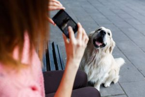 pet photography | Ultimate Pet Nutrition