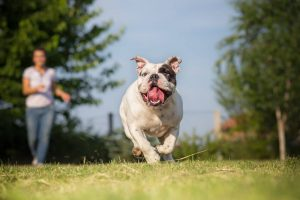 playing with dog | Ultimate Pet Nutrition