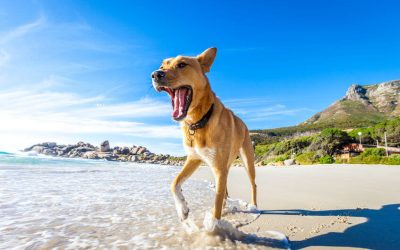 Summer Safety Tips For Pets: Keep Your Dog Safe This Summer