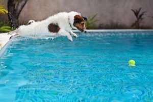summer safety tips for dogs | Ultimate Pet Nutrition