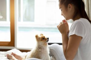 training treats | Ultimate Pet Nutrition