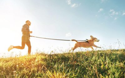 How To Get Fit By Working Out With Your Dog
