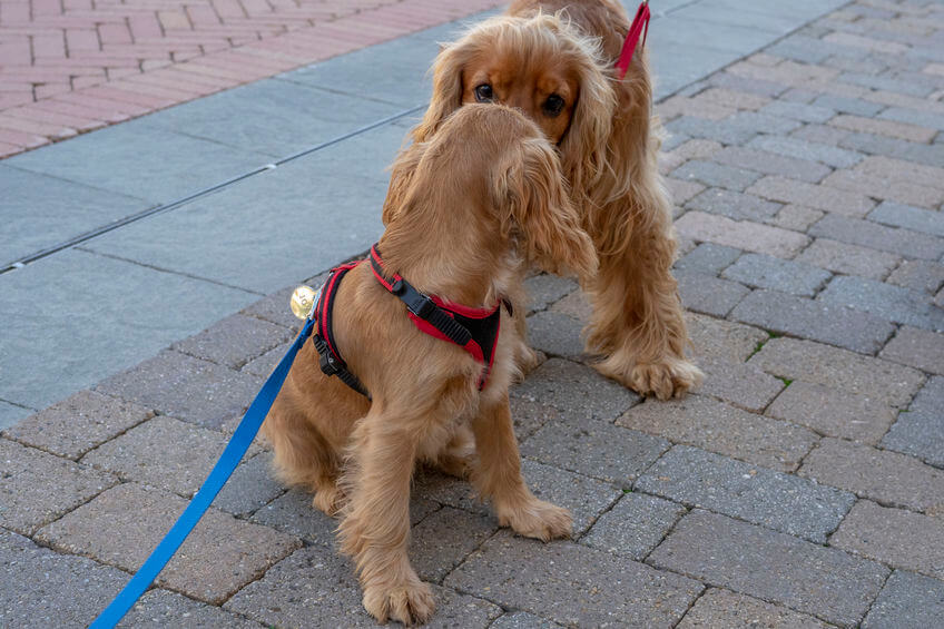 Info for Pet Parents: When Can Puppies Go Outside for Socialization in Public?