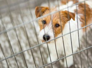 dog in crate | Ultimate Pet Nutrition