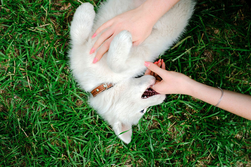 How To Teach A Puppy Not To Bite