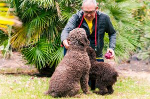 dogs with owner | Ultimate Pet Nutrition