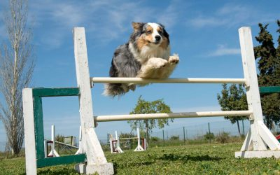 Choosing The Right Sport For Your Dog
