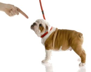 scolding dog | Ultimate Pet Nutrition