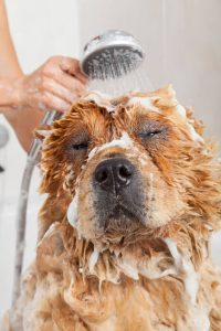 bathing dog | Ultimate Pet Nutrition