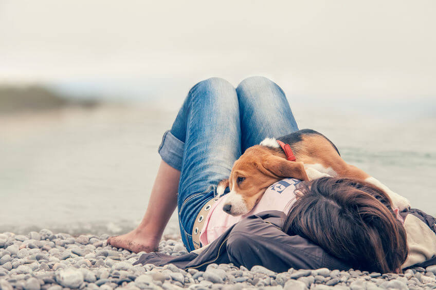 dog at beach | Ultimate Pet Nutrition