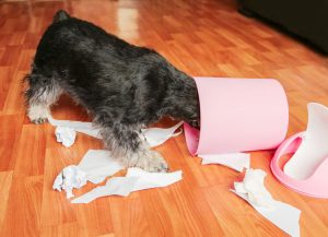 dog getting into trash | Ultimate Pet Nutrition