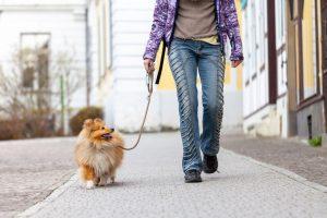 dog walking | Ultimate Pet Nutrition