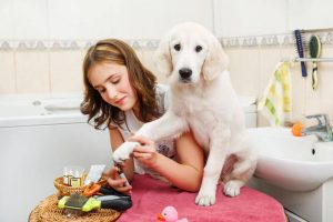 grooming dog | Ultimate Pet Nutrition