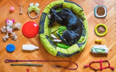 Tips For Organizing Pet Supplies: Helpful Info For Dog Parents