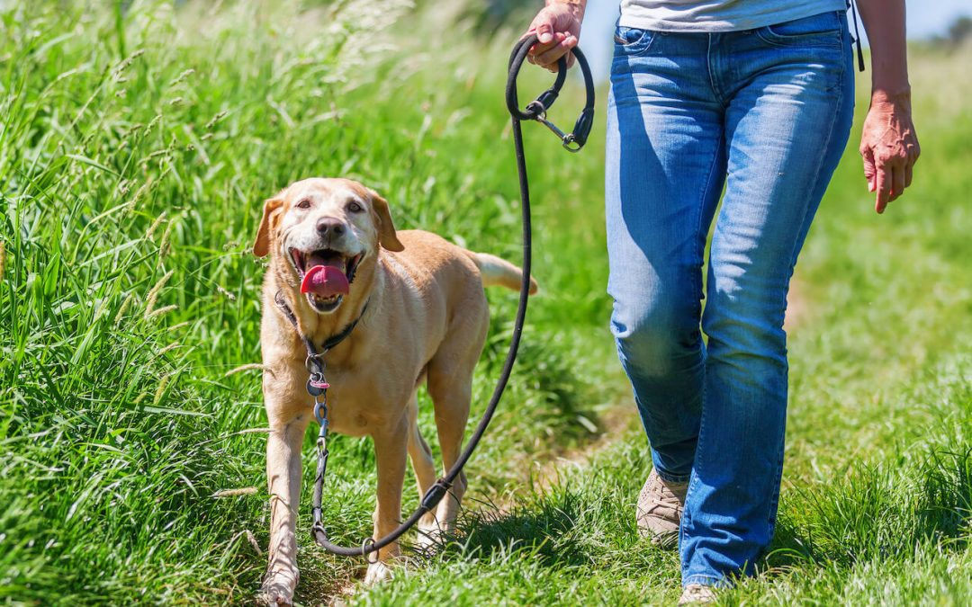 How To Train A Dog To Walk On A Leash Beside You