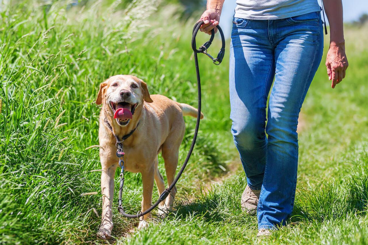 training walks | Ultimate Pet Nutrition