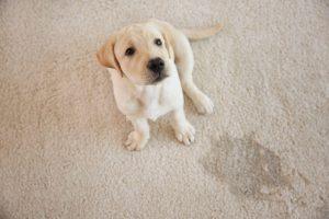Puppy potty pads | Ultimate Pet Nutrition