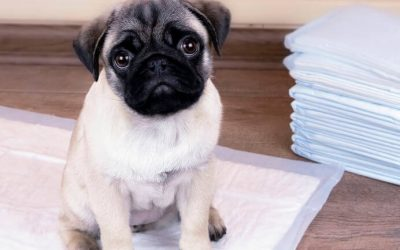 Puppy Pad Training: How To Housetrain Your Dog To Use A Potty Pad Or Pee Pad