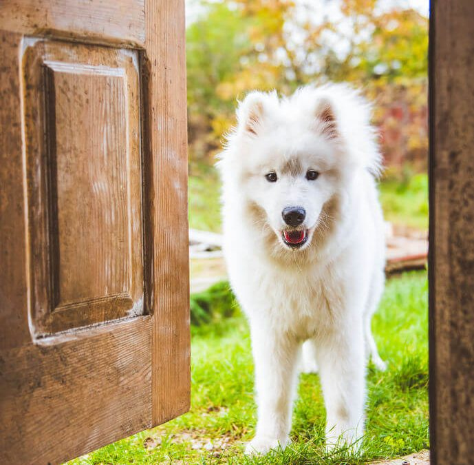 Puppy Training And Behavior: How To House Train A Puppy Or Dog