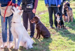 dog training class | Ultimate Pet Nutrition