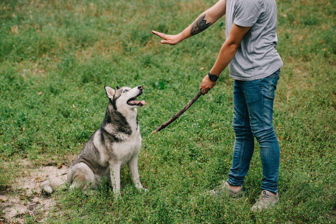 dog training | Ultimate Pet Nutrition