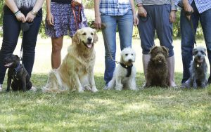 obedience training | Ultimate Pet Nutrition