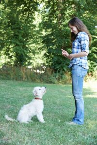 training dog | Ultimate Pet Nutrition