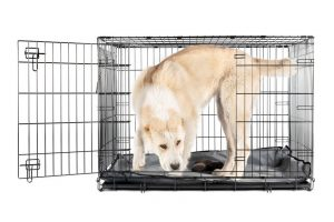 Alabai shepherd in crate | Ultimate Pet Nutrition