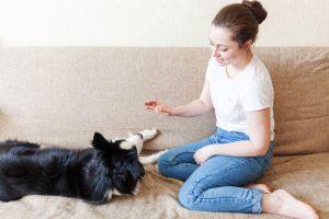puppy tricks | Ultimate Pet Nutrition