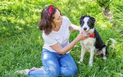 Basic Puppy Tricks And Training: Easy Dog Tricks To Teach Your Furry Friend