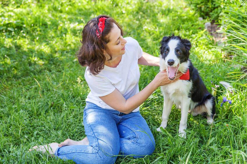 puppy positive reinforcement | Ultimate Pet Nutrition
