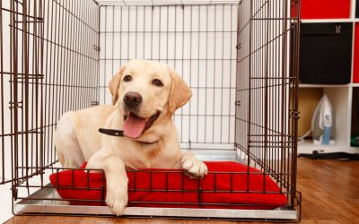 How To Stop Your Puppy Whining In Crate At Night