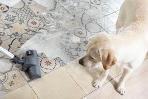 dog and vacuum | Ultimate Pet Nutrition