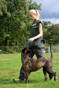dog training   Ultimate Pet Nutrition