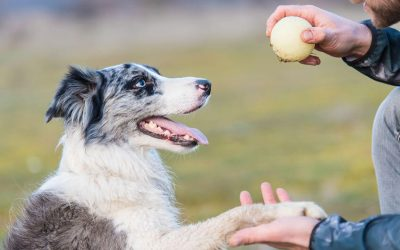 Doggy Boot Camp: Are Dog Training Boot Camps Safe And Effective?