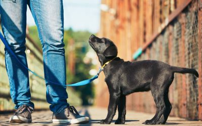 How To Start Leash Training A Puppy