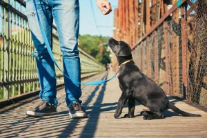 leash training a puppy | Ultimate Pet Nutrition