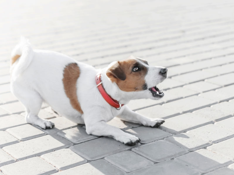 How To Stop Your Puppy From Barking At Other Dogs Or Even People