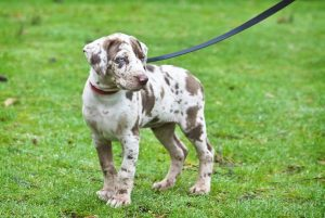 puppy on leash | Ultimate Pet Nutrition