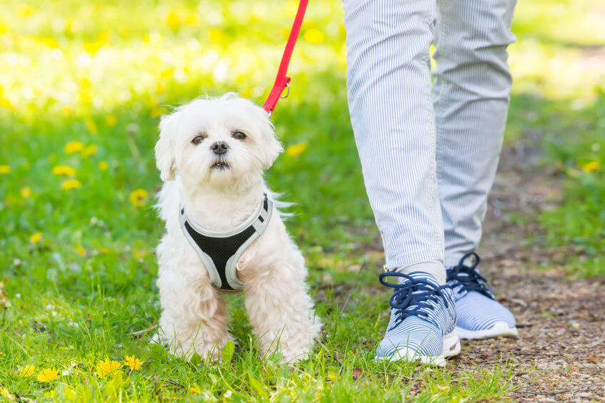 walking dog | Ultimate Pet Nutrition