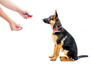 training with clicker | Ultimate Pet Nutrition