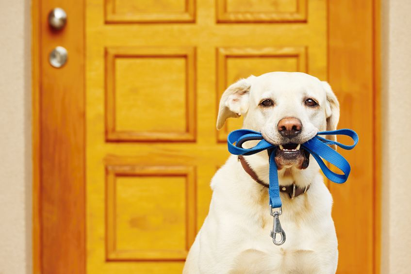 Potty Bell Training Techniques To Teach Your Dog Or Puppy