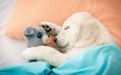 Puppy Sleep Training: How To Get Your Puppy To Sleep Through The Night